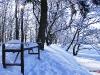 zima-tt-2001-22