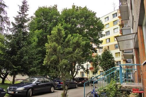 kubinu-stromy