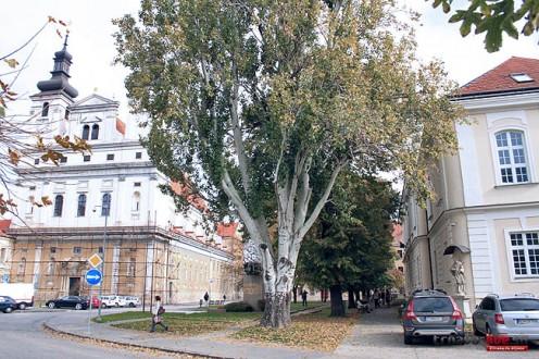 univerzitny-parcik-2
