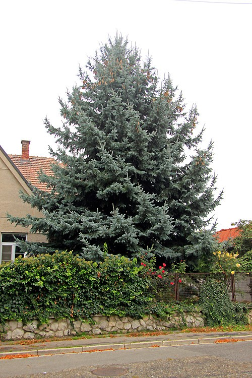 strom-d