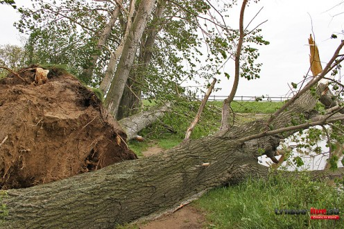spadnuty-strom