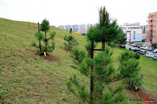 stromy-vysadba-1