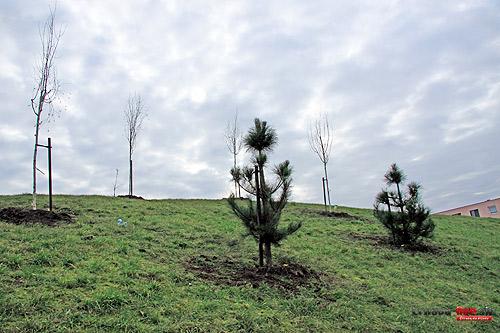stromy-vysadba-5