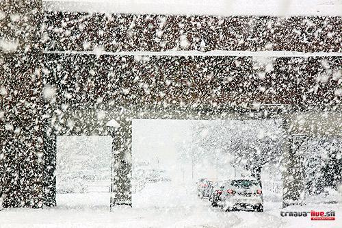 sneh-3